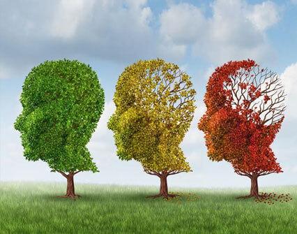 Човешката памет: функция, физиология и нарушения – част 1